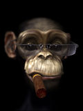 Mr Chimp the pimp. Funny 3d Character on black Royalty Free Stock Images