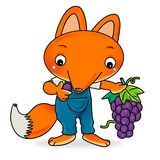Mr Fox. Holding a bunch of grapes Royalty Free Stock Images