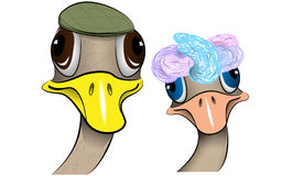 Mr & Mrs Ostrich cartoon. Ostrich cartoon portrait wearing hats Royalty Free Stock Image
