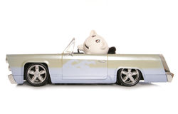 Mr and mrs piggy bank in a car Royalty Free Stock Photo
