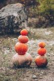 Mr. Pumpkin is outstanding stock photos