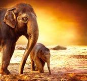 Mère d'éléphant avec la chéri Image stock