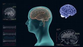 MRI van de menselijke hersenen in de sagital projectie royalty-vrije illustratie