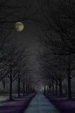 mörk mystisk park Fotografering för Bildbyråer