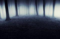 Mörk overklig skog med dimma på natten Arkivfoto