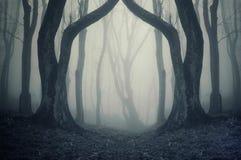 Mörk skog med dimma och symmertical enorma konstiga träd på halloween Royaltyfri Foto