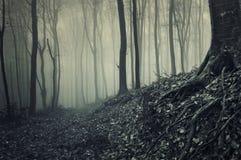 Mörk spöklik skog med dimma och halloween atmosfär Arkivfoton
