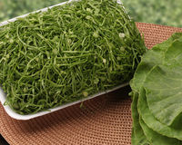 Mörker - gröna grönsaker är mer sund Arkivbild