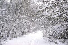 Mroźny krajobraz pod śnieżną burzą w Vancouver wyspie zdjęcie stock