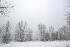 Mroźny krajobraz pod śnieżną burzą w Vancouver wyspie obrazy stock