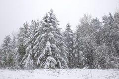 Mroźny krajobraz pod śnieżną burzą w Vancouver wyspie zdjęcia stock