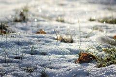 Mroźna łąka błyska w świetle słonecznym zdjęcia royalty free