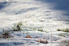 Mroźna łąka błyska w świetle słonecznym fotografia royalty free