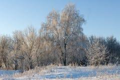 mroźna dzień zima Zdjęcie Stock