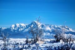 mroźna krajobrazowa zima Gałąź zakrywać z śniegiem i lodem w zimnej zimie wietrzeją Fotografia Royalty Free
