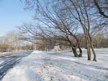 mroźna ranek natury opadu śniegu zima zdjęcie royalty free