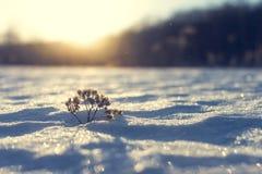 Mroźna trawa przy zima zmierzchem tło płatków śniegu biały niebieska zima fotografia royalty free