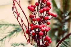 Mroźne czerwone jagody w zima śniegu Obrazy Royalty Free
