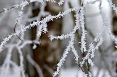 Mroźne gałąź drzewo w zimie obraz royalty free