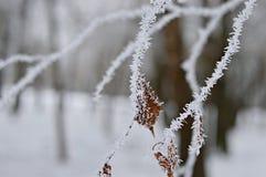 Mroźne gałąź drzewo w zimie zdjęcie royalty free