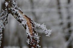 Mroźne gałąź drzewo w zimie fotografia royalty free
