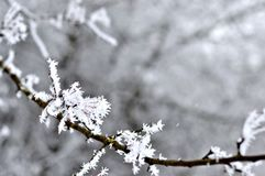 Mroźne gałąź drzewo w zimie obraz stock