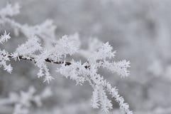 Mroźne gałąź drzewo w zimie zdjęcie stock