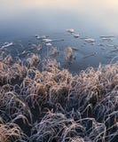 Mroźne trawy zamarzniętym jeziorem fotografia stock