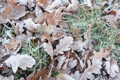 Mroźni lasów liście Fotografia Royalty Free