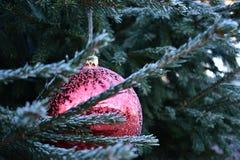Mroźny czerwony Bożenarodzeniowy bauble na drzewie zdjęcie royalty free