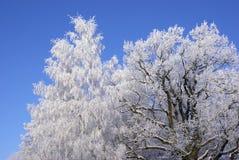 mroźny drzewo zdjęcie stock