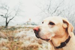 Mroźny dzień z psem fotografia royalty free
