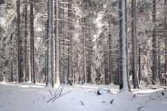 Mroźny i śnieżny lasowego drzewa krajobraz Zdjęcia Royalty Free