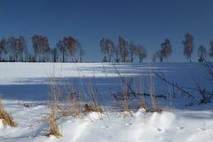 Mroźny krajobraz z drzewami i niebieskim niebem fotografia royalty free