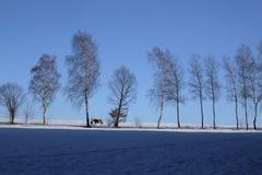 Mroźny krajobraz z drzewami i niebieskim niebem zdjęcia royalty free