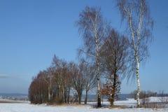 Mroźny krajobraz z drzewami i niebieskim niebem obrazy royalty free