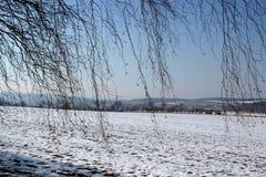 Mroźny krajobraz z drzewami i niebieskim niebem obraz royalty free
