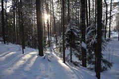 Mroźny las w światłach wieczór słońce Obrazy Royalty Free