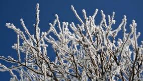 Mroźny, pogodny ranek, Hoarfrost nakrywkowe gałąź w zimie Obrazy Stock