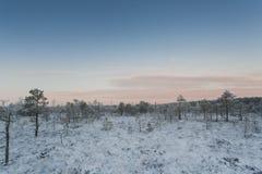 Mroźny ranek przy lasu krajobrazem z roślinami, drzewami i wodą zamarzniętymi, Obraz Stock
