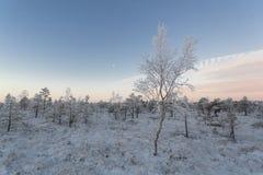 Mroźny ranek przy lasu krajobrazem z roślinami, drzewami i wodą zamarzniętymi, Obrazy Stock