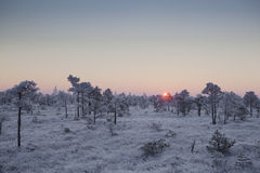 Mroźny ranek przy lasu krajobrazem z roślinami, drzewami i wodą zamarzniętymi, Fotografia Stock