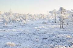 Mroźny ranek przy lasu krajobrazem z roślinami, drzewami i wodą zamarzniętymi, Zdjęcie Stock