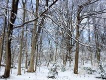 Mroźny scena Niedawno Spadać śnieg w lesie Zdjęcia Royalty Free