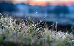 Mroźny trawa szczegół z ranek rosą obraz stock