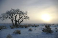 mroźny wschód słońca Zdjęcie Stock