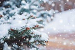 Mroźny zima krajobraz w śnieżnych lasowych Sosnowych gałąź zakrywać z śniegiem w zimnej zimy pogodzie Obraz Royalty Free