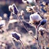 mrożona roślinnych Zdjęcie Stock