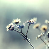 mrożona roślinnych Zdjęcia Stock