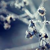 mrożona roślinnych Fotografia Royalty Free